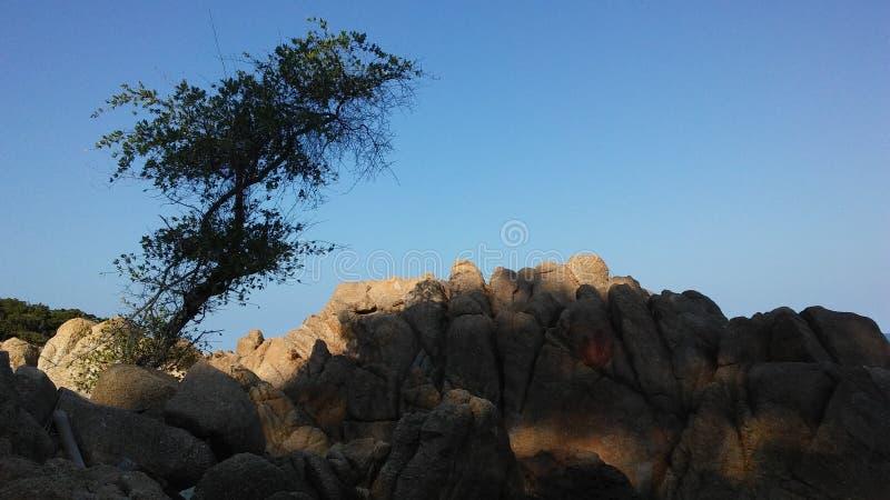 Baum, der auf Felsen auf Strand auf Koh Samui Island, Thailand wächst stockfoto