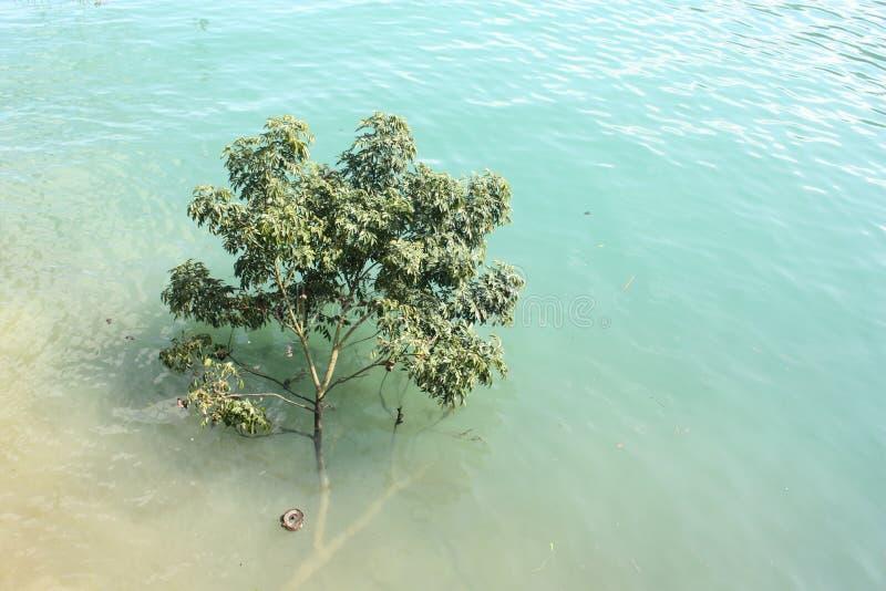 Baum, der auf Fluss schwimmt stockfotos