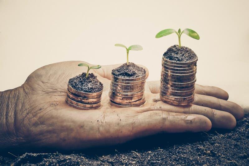Baum, der auf Stapel Münzen wächst lizenzfreie stockfotografie