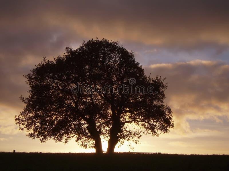 Baum an der Dämmerung lizenzfreies stockfoto