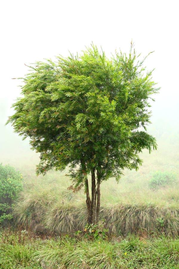 Baum, der in der Brise durchbrennt lizenzfreie stockfotos