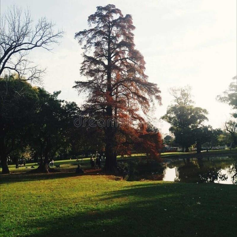 Baum, der die Lagune übersieht lizenzfreie stockfotos