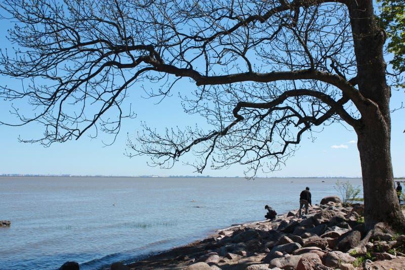 Baum in der Flussbank stockfotografie