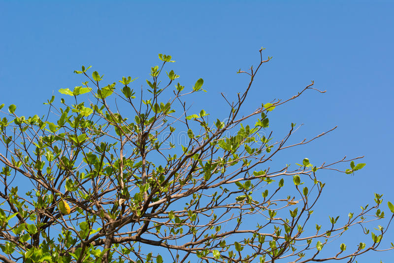Baum, der am hellen Tag wächst stockbild