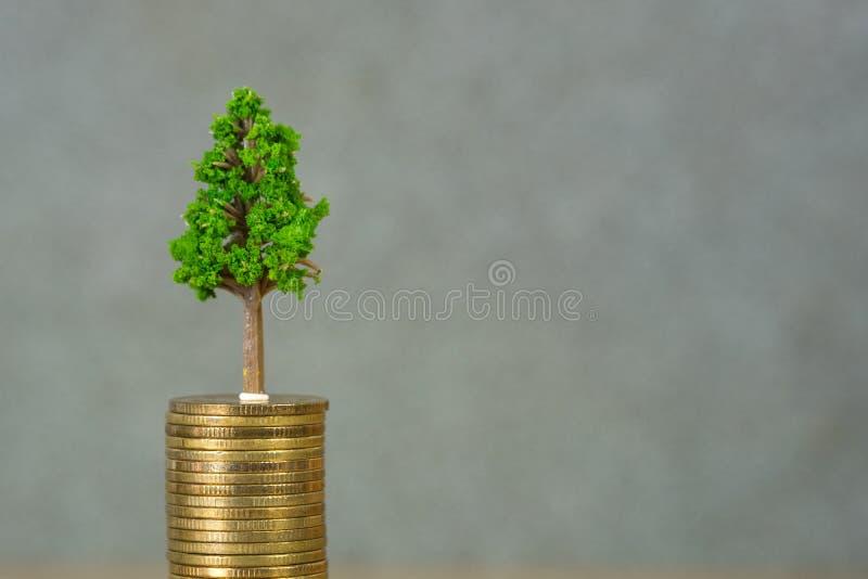 Baum, der herein auf Stapel von goldenen Münzen, Wachstumsgeschäftsfinanzierung wächst stockfoto