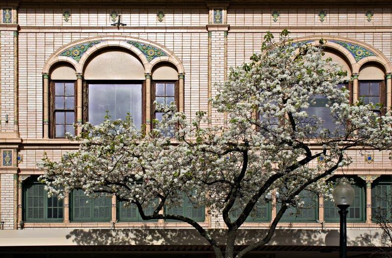 Baum, der in im Stadtzentrum gelegenem Napa, Kalifornien blüht lizenzfreies stockbild