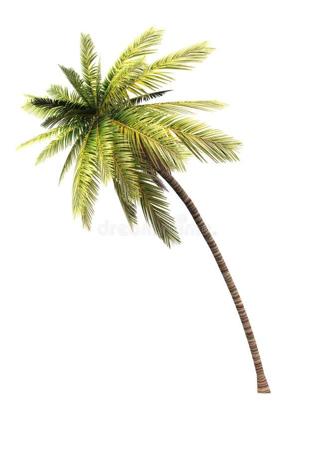 Baum der Kokosnuss 3D 02 stock abbildung
