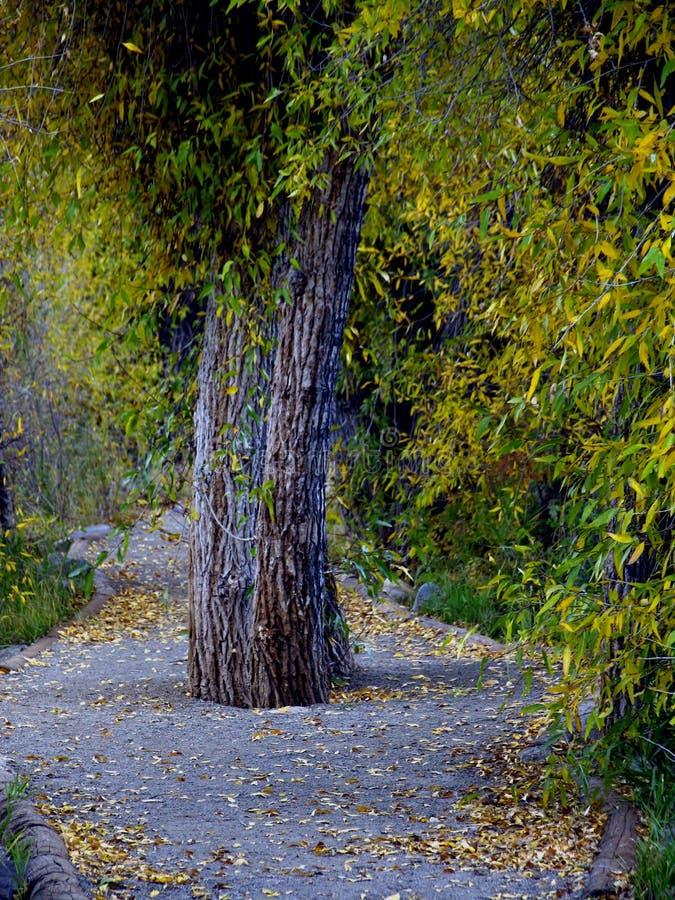 Download Baum in der Mitte stockfoto. Bild von nave, pfad, bäume - 26900