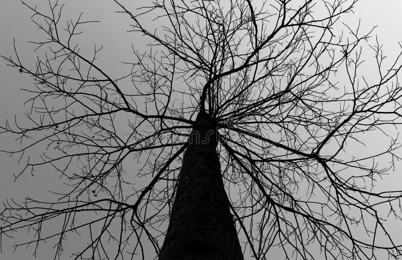 Baum in der Mitte stockbild