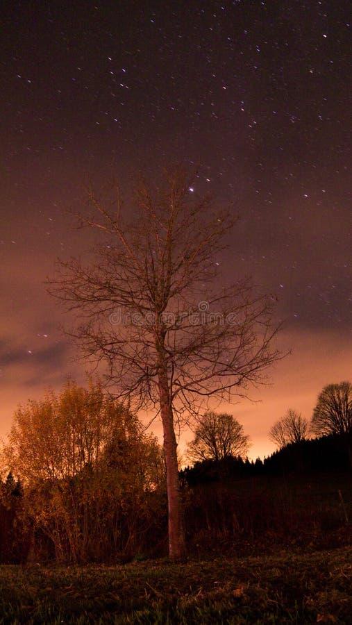 Baum in der Nacht lizenzfreie stockfotos