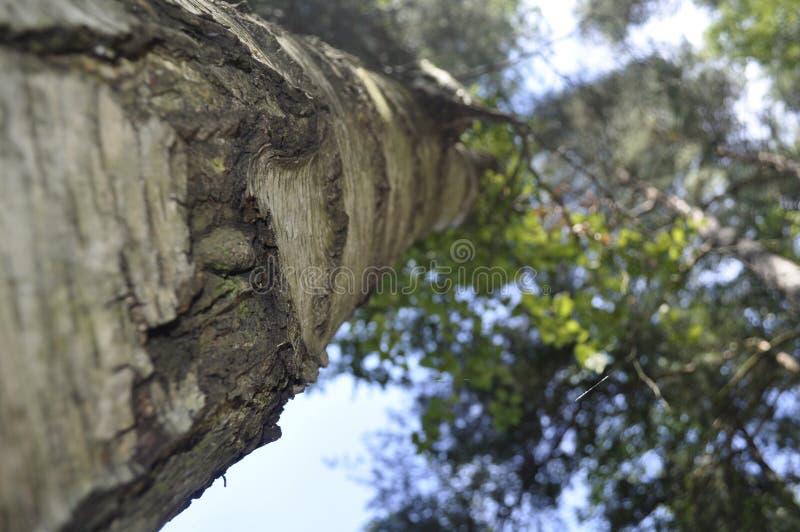 Baum in der Natur lizenzfreie stockfotografie