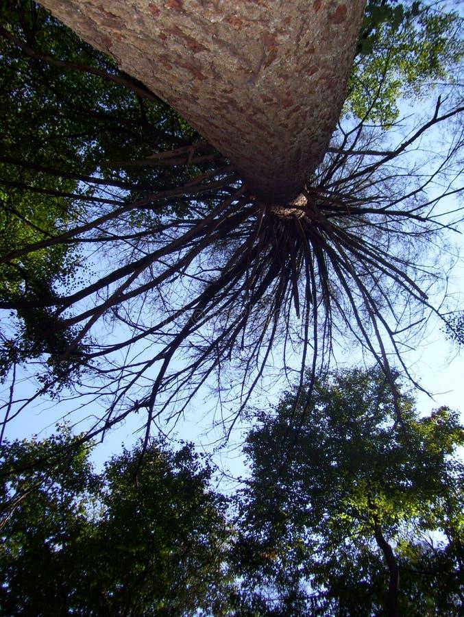 Baum, der sich heraus verzweigt lizenzfreie stockfotografie