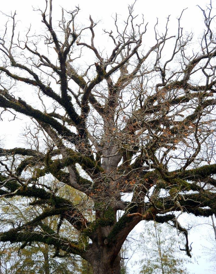 Baum, der sich heraus verzweigt lizenzfreies stockfoto