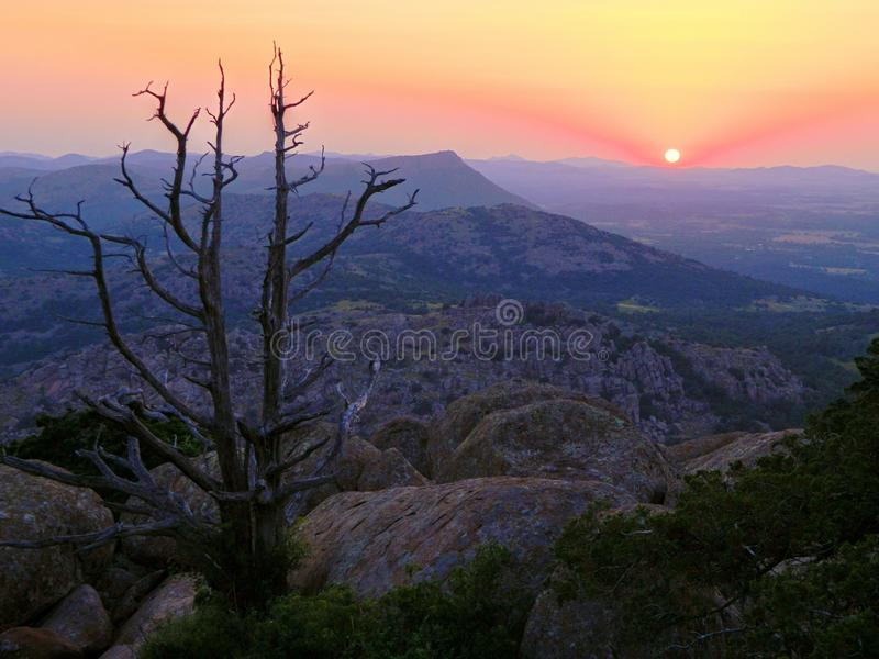 Baum, der Sonnenuntergang genießt lizenzfreie stockbilder