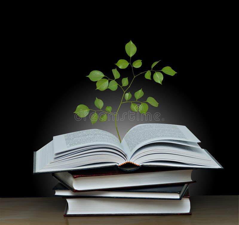 Baum, der vom geöffneten Buch wächst stockbilder