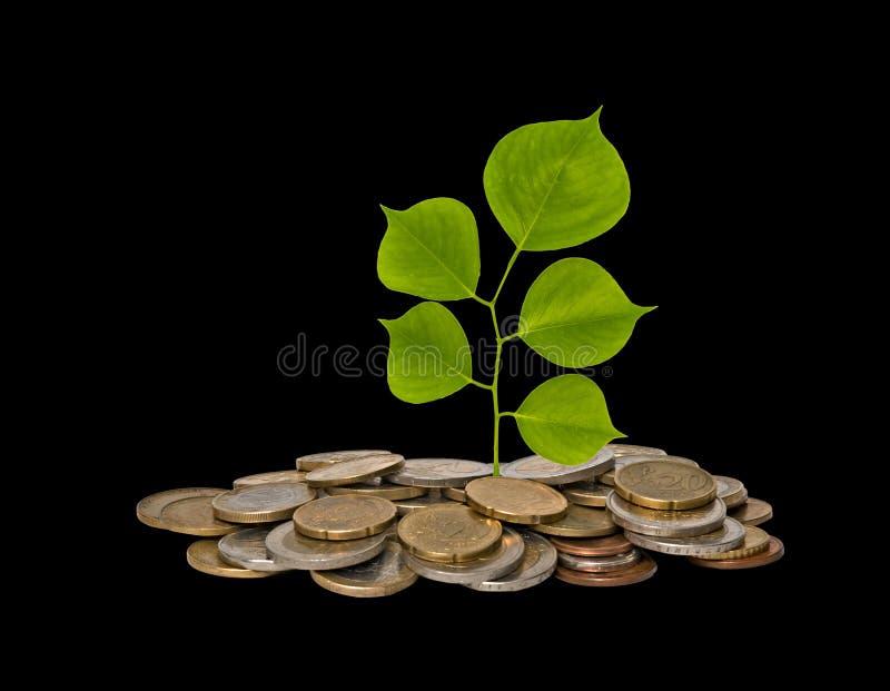 Baum, der von den Münzen wächst lizenzfreie stockfotografie