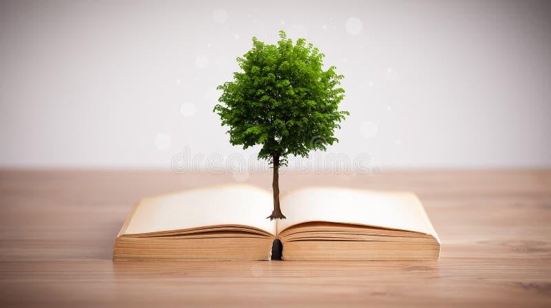 Baum, der von einem offenen Buch wächst lizenzfreies stockbild