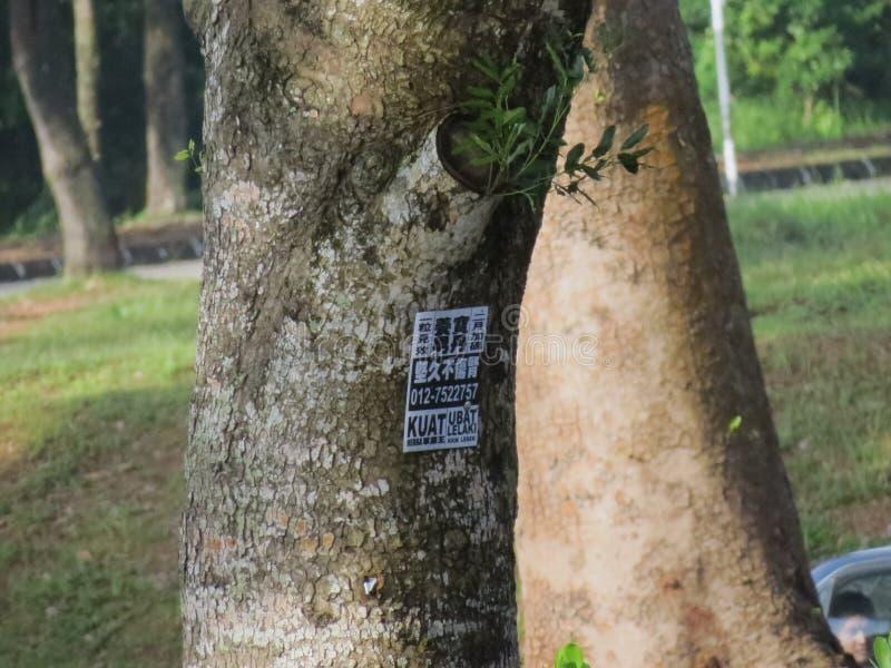 Baum der Welt lizenzfreies stockbild