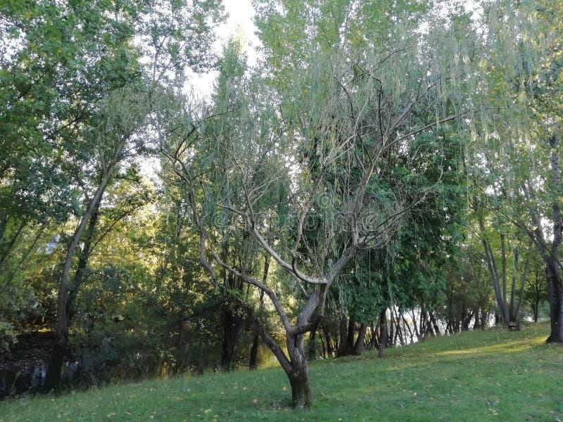 Baum des Herbstes stockfotografie