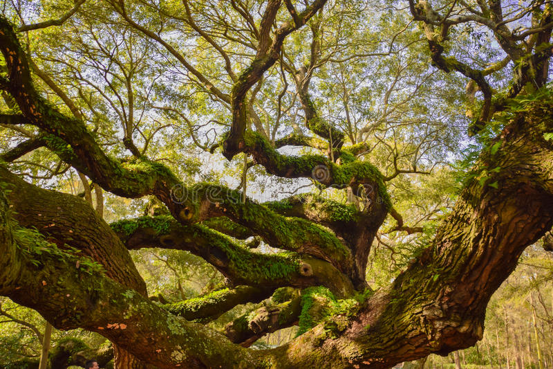 Baum des Lebens stockfoto
