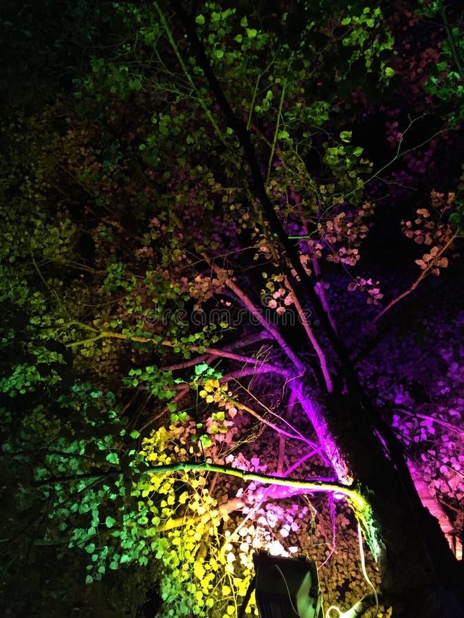 Baum des Lebens stockbild