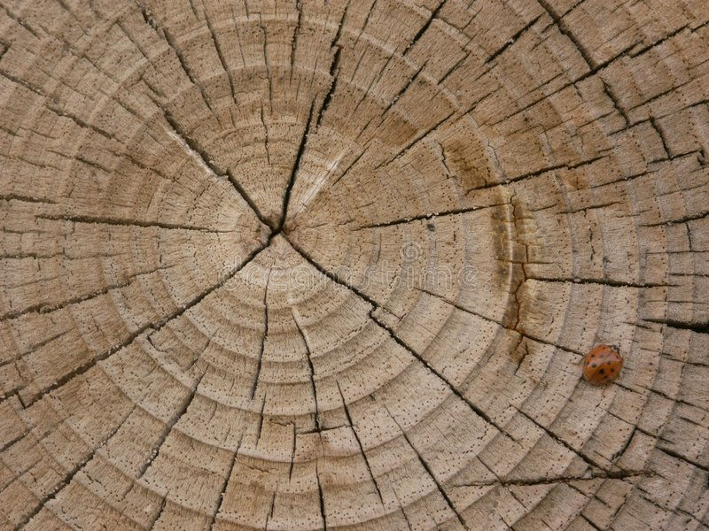 Baum Des Lebens Lizenzfreies Stockfoto