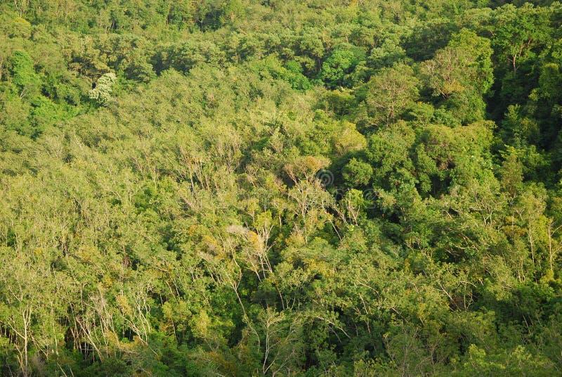 Baum des Waldes und Natur Hatyai Thailand lizenzfreie stockfotografie