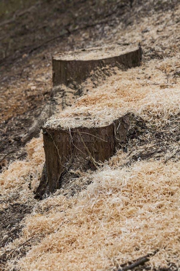 Baum- des Waldesstümpfe und -sägemehl lizenzfreie stockbilder