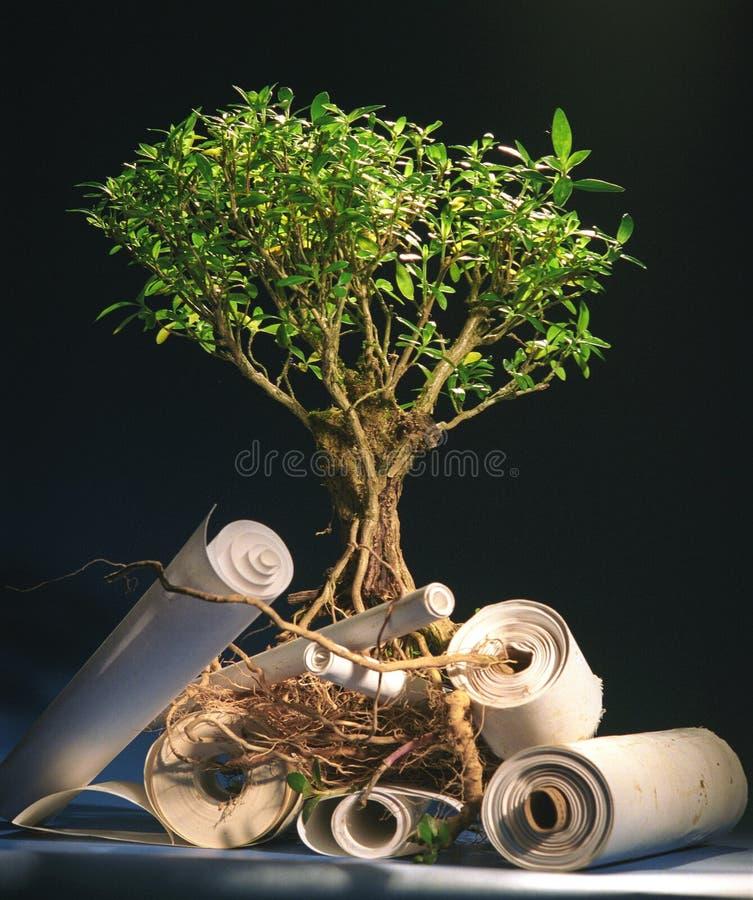Baum des Wissens stockbild