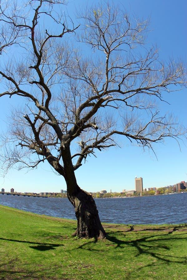 Baum durch den Fluss stockbilder