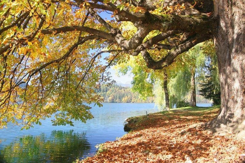 Baum durch den See stockfotos