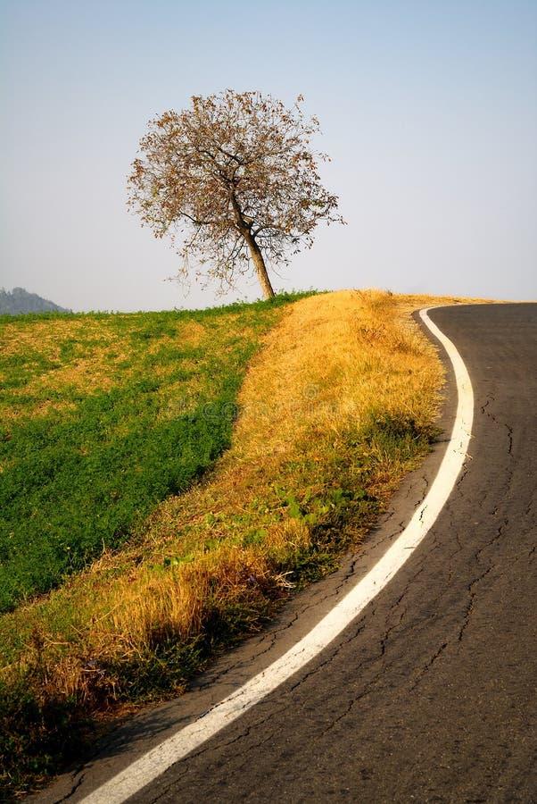 Baum durch die Seite einer Straße lizenzfreie stockfotos