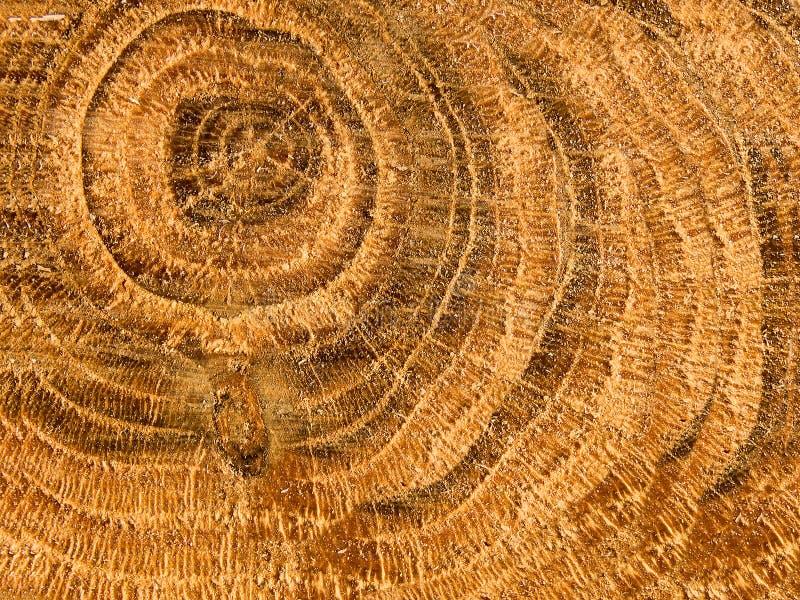 Baum eine Eiche intern eine Struktur lizenzfreie stockfotografie