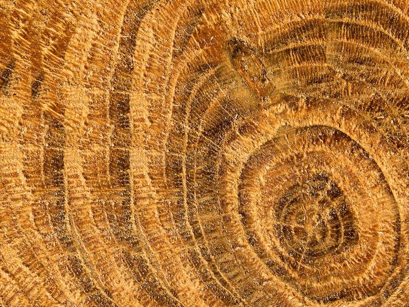 Baum eine Eiche intern eine Struktur lizenzfreies stockbild