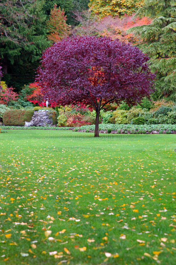 Baum in einem Garten lizenzfreie stockbilder