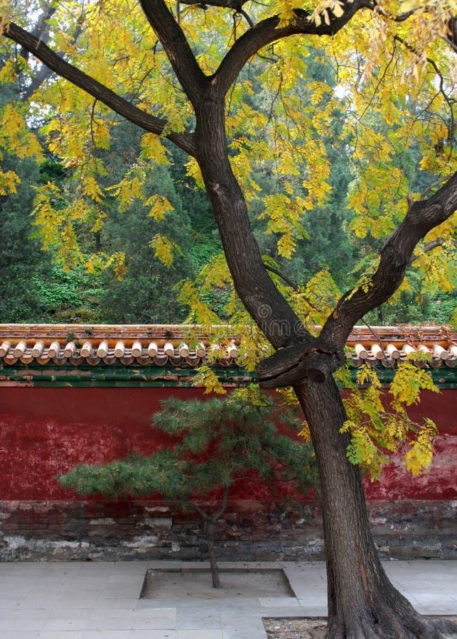 Baum in einem Hof stockbild