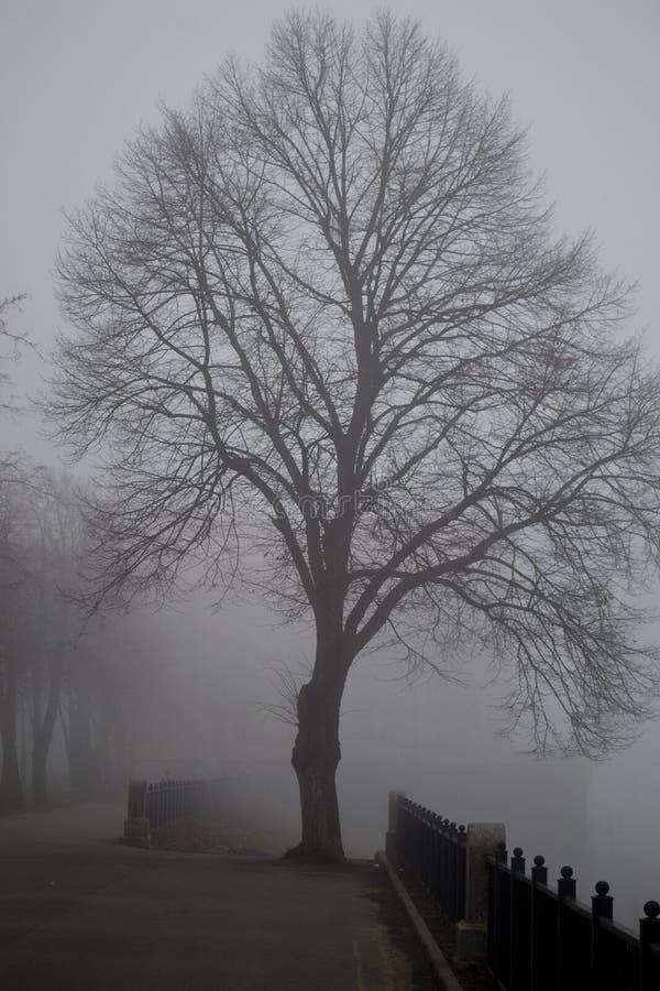 Baum in einem Nebel stockfotos