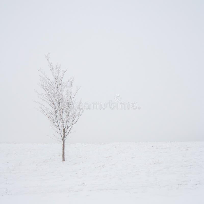 Baum in einem Schnee-Sturm lizenzfreies stockbild