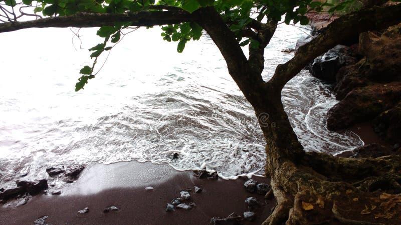 Baum in einem Strand mit rotem Sand lizenzfreie stockbilder
