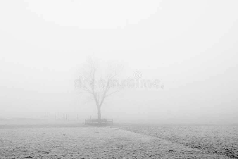 Baum in einer nebeligen Landschaft lizenzfreies stockfoto