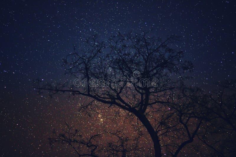Baum entwickelt sich den zu Himmel lizenzfreie stockfotos