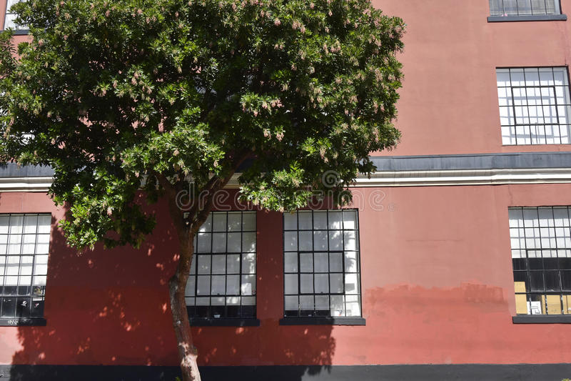 Baum am Fenster in San Francisco stockfoto