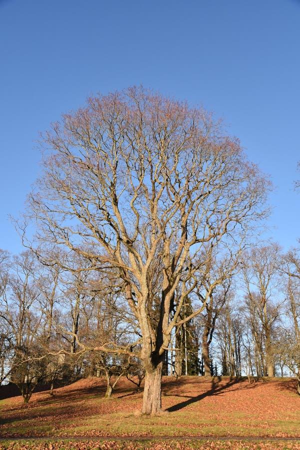 Baum finnland stockbild