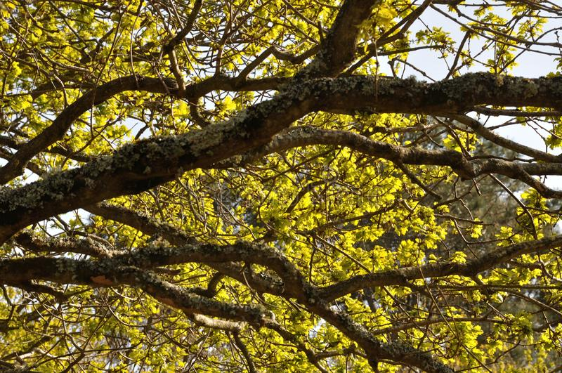 Baum am Fr?hling stockbilder