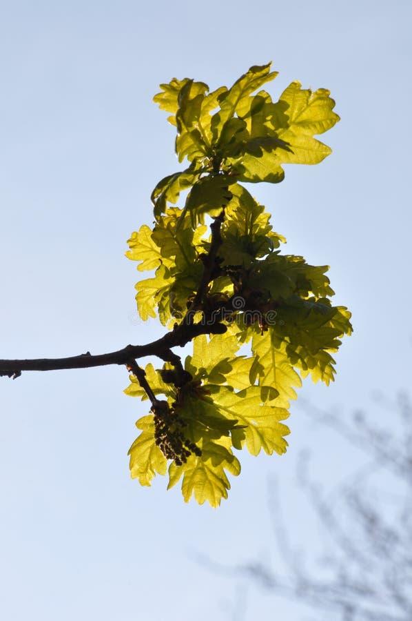Baum am Fr?hling lizenzfreie stockfotos