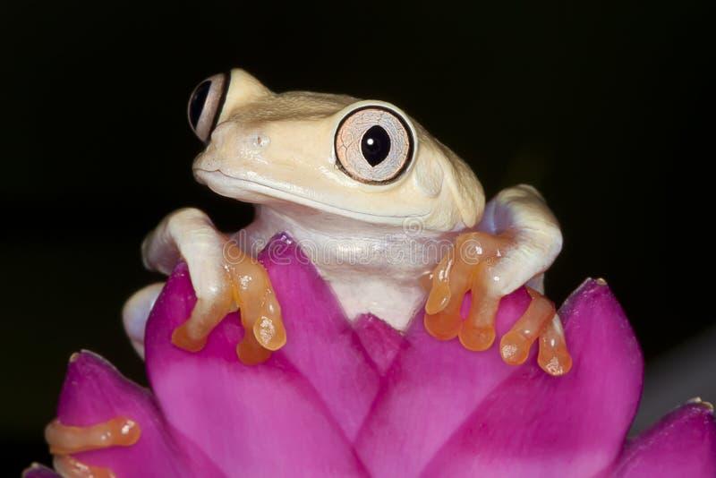 Baum-Frosch-Freude lizenzfreies stockbild