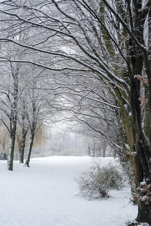 Baum-Gasse in Deutschland bedeckte mit Schnee lizenzfreie stockfotografie