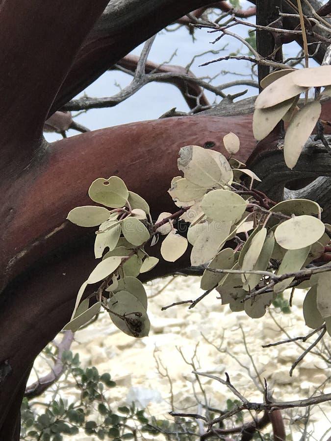 Baum gefunden in Yosemite Nationalpark stockbilder