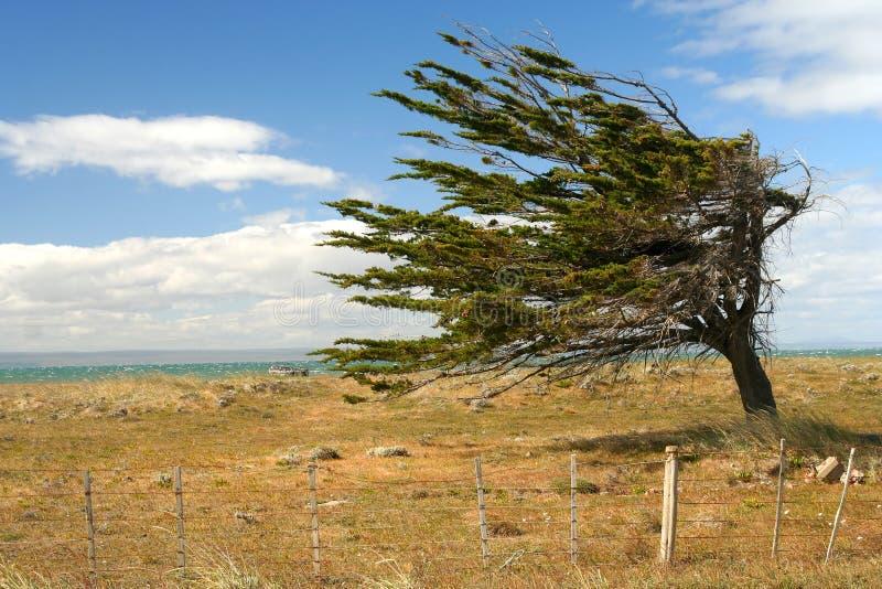 Baum gegen den Wind lizenzfreies stockfoto