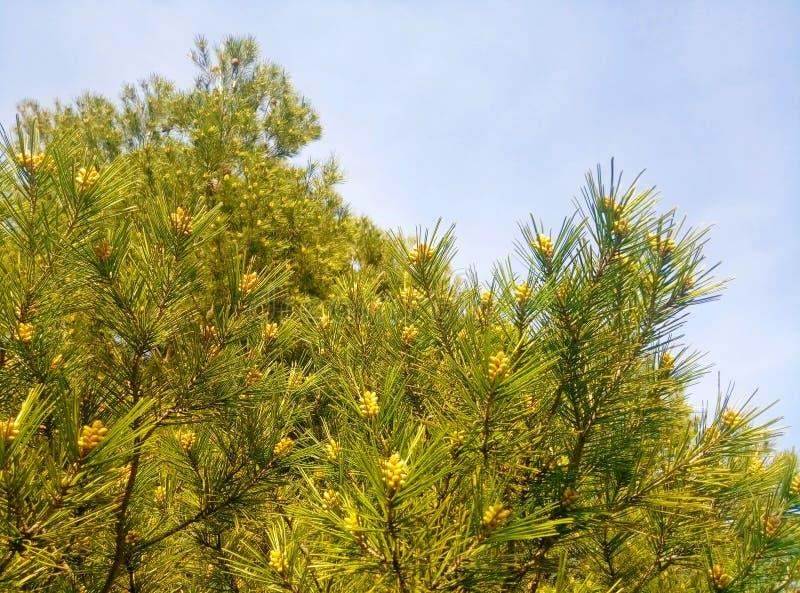 Baum gegen die Himmelgrüntischplattentapete wie Niederlassungen lizenzfreie stockfotos